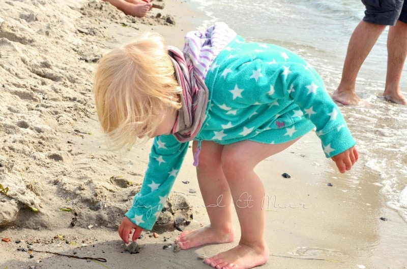Muscheln am Strand (3)