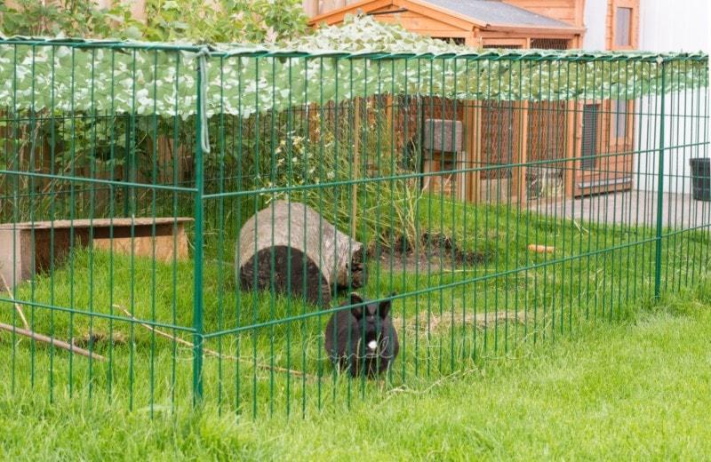 Kaninchen Freilauf