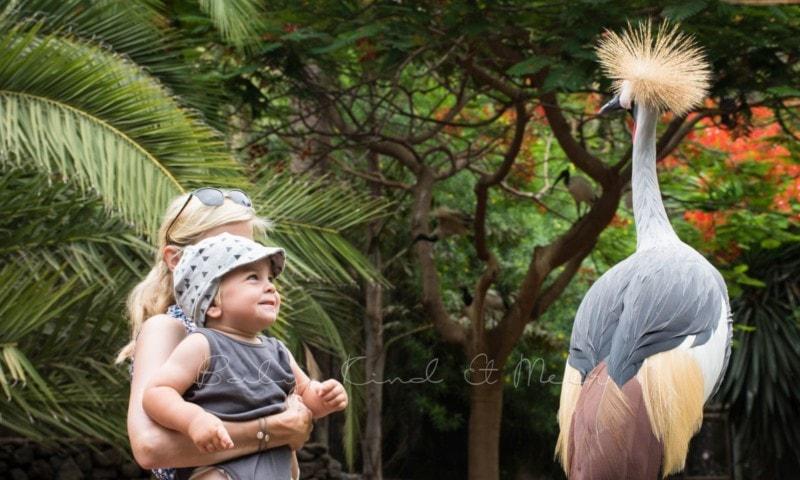 palmitos-park-gran-canaria-6
