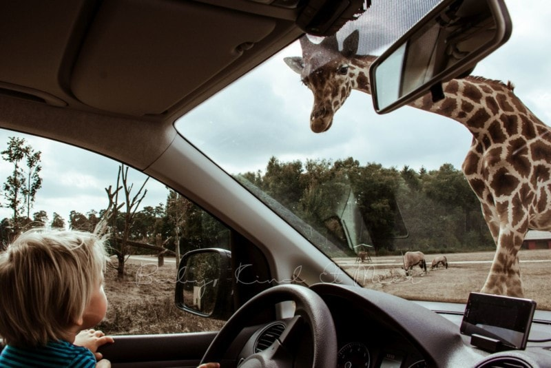 august-serengeti-park