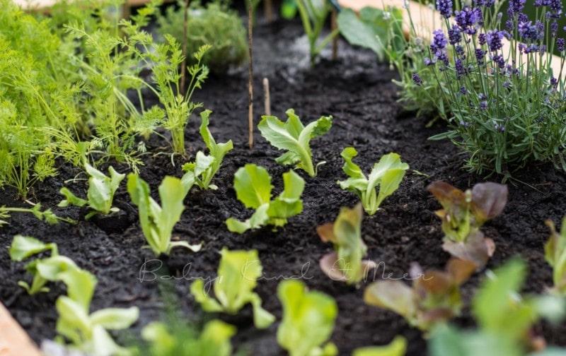 Hochbeet Selber Bauen Hausbau Garten Diy Inspirationen Baby