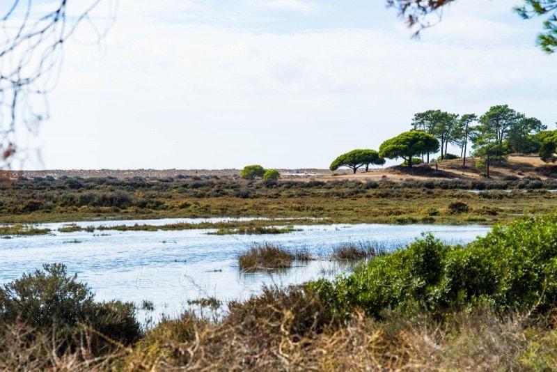 Naturschutzgebiet Ria Formosa 3