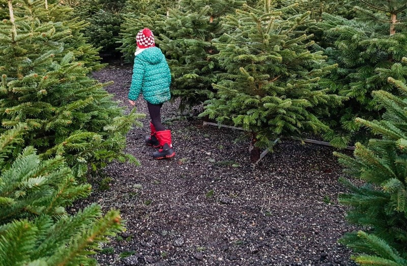 Weihnachtsbaumkauf 2