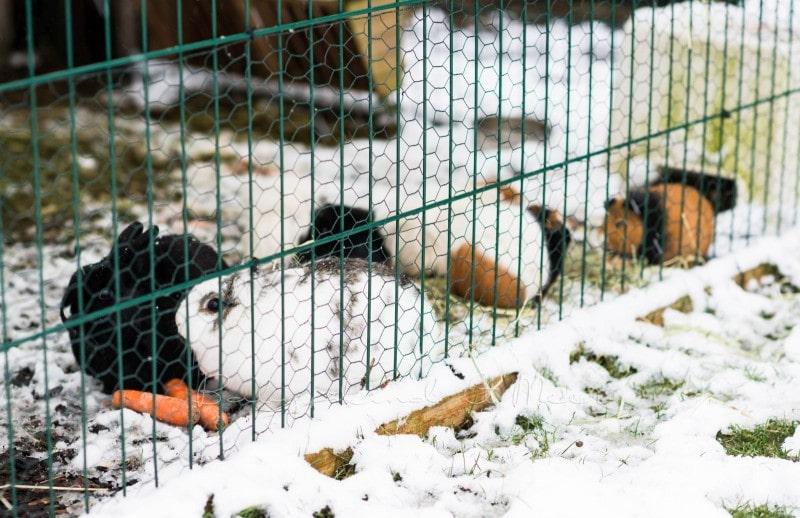 Schnee im Garten 3