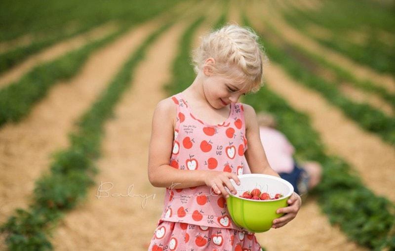 Erdbeeren pfluecken 1 1