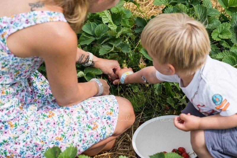 Erdbeeren pfluecken 3