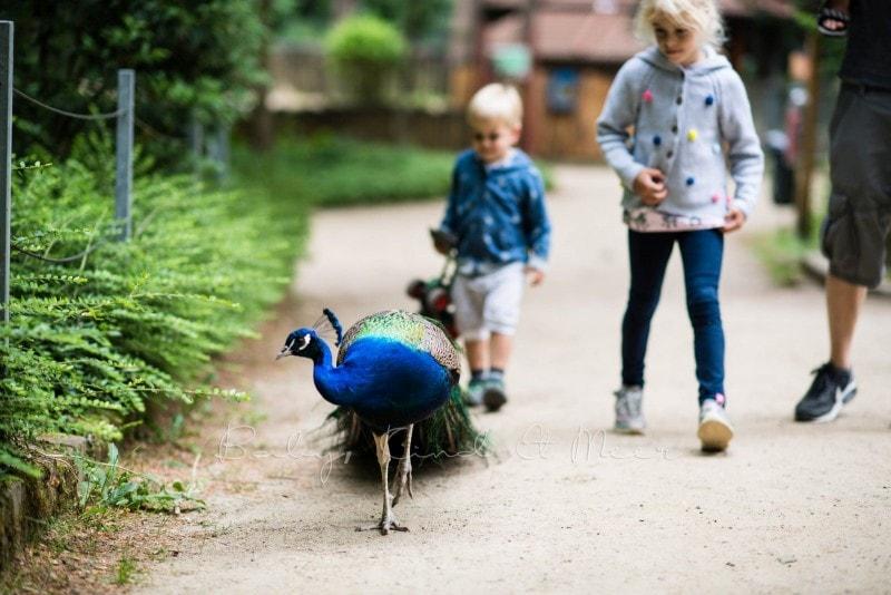 Tierpark Neumuenster 5