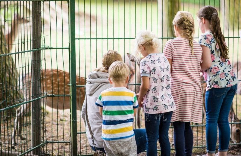 Tierpark Neumuenster 9