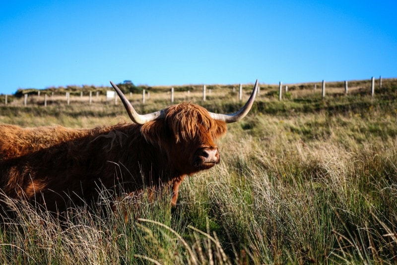 Rundreise durch Schottland 306