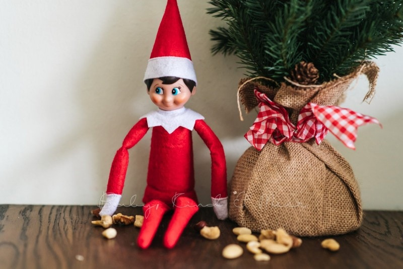 The Elf on the Shelf 4